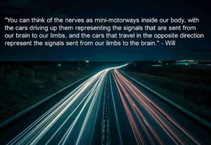 A motorway is a good analogy to describe how a nerve works in the context of sciatica symptoms